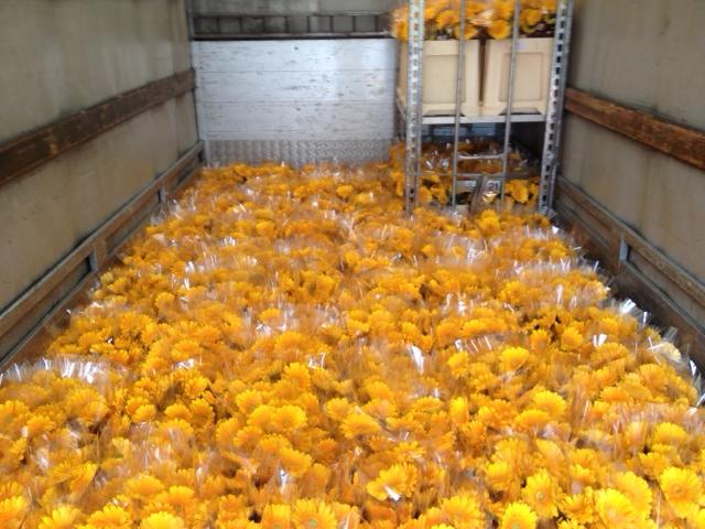 Blumentransport